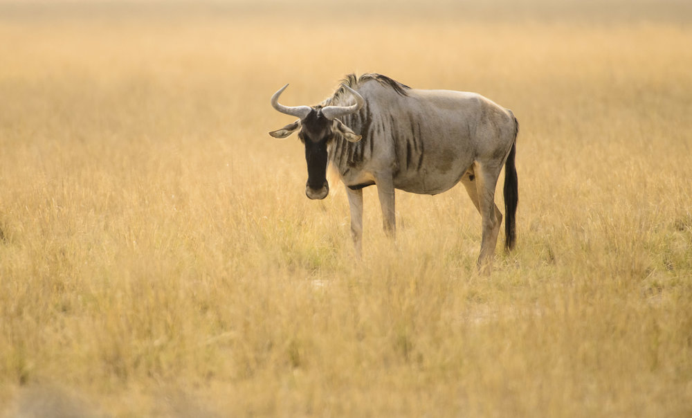 OscarDewhurst_Kenya_2014-62.jpg