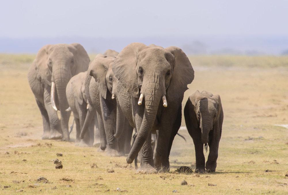OscarDewhurst_Kenya_2014-77.jpg