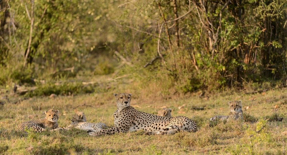 OscarDewhurst_Kenya_2014-212.jpg