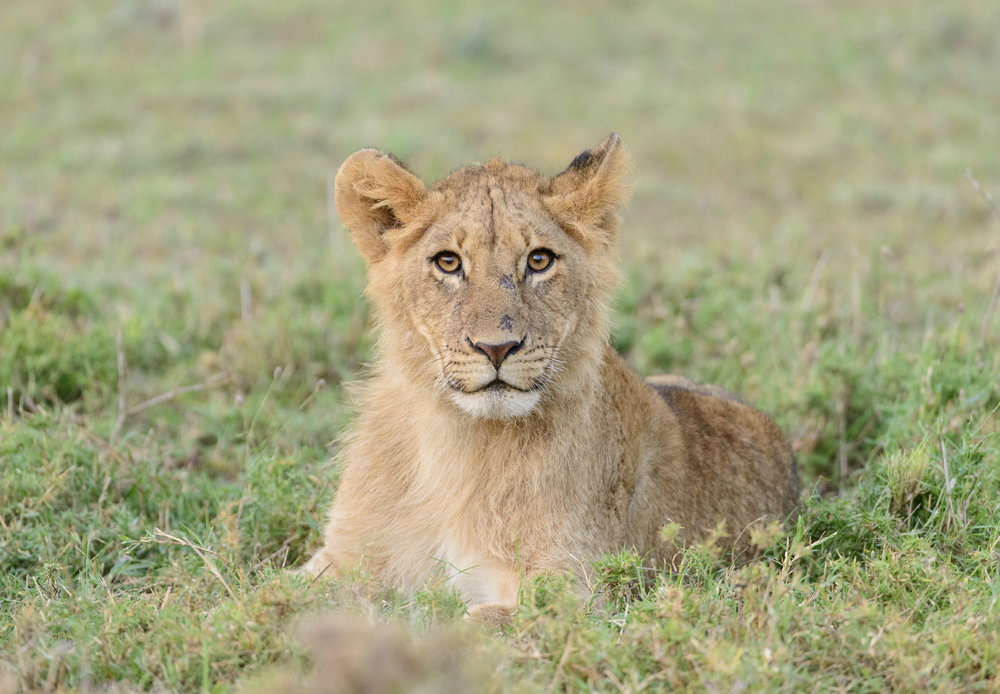 OscarDewhurst_Kenya_2014-380.jpg