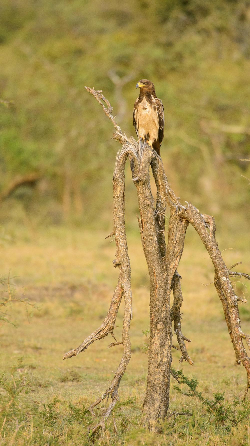 OscarDewhurst_Kenya_2014-522.jpg
