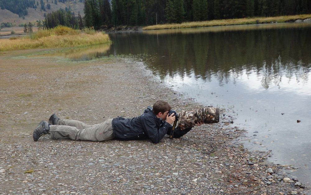 Photographing moose in Grand Teton National Park