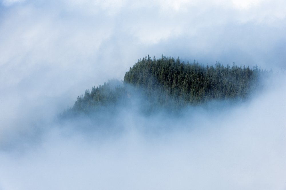 2015_10-Trees-in-the-clouds-web.jpg