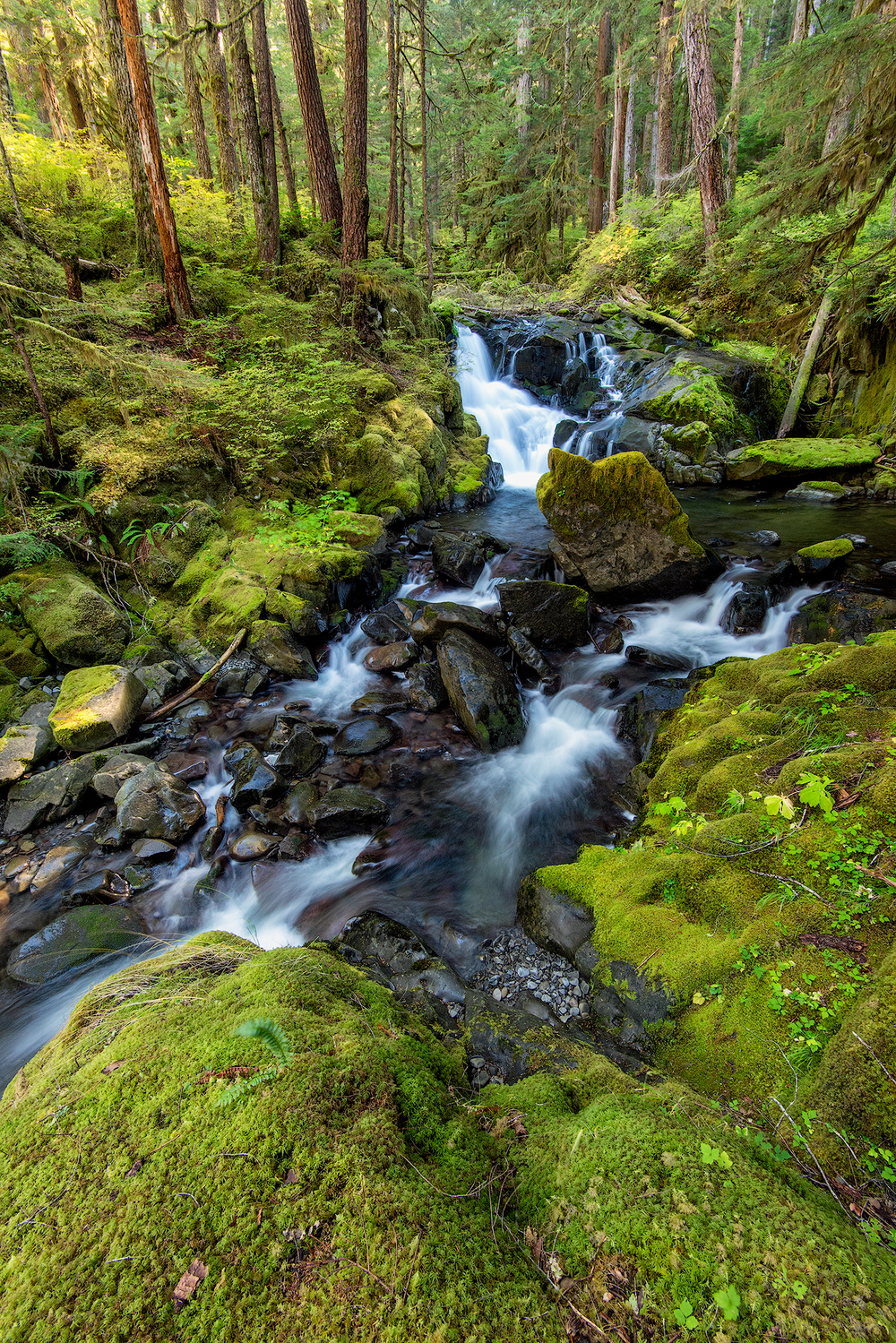 2015_10-Sol-Duc-Creek-3-web.jpg