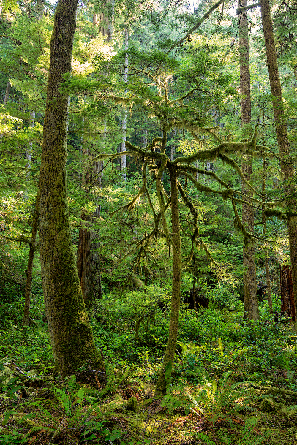 10_2015-Sol-Duc-Forest-Moss-Tree-web.jpg
