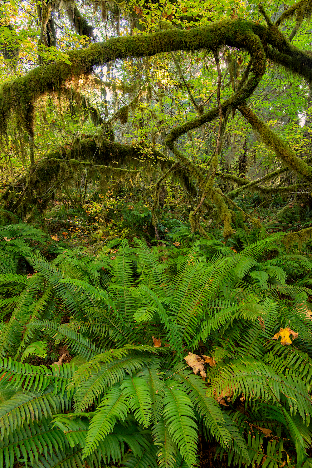 2015_10-Sol-Duc-Jungle-web.jpg