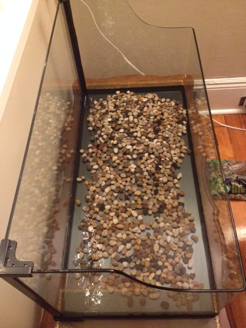 Half of the small river pebbles in the tank.