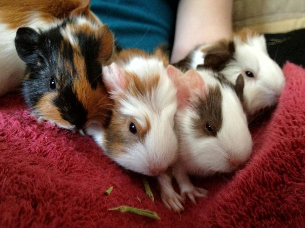 From left: Sassafras, Clove, Nutmeg, Ginger