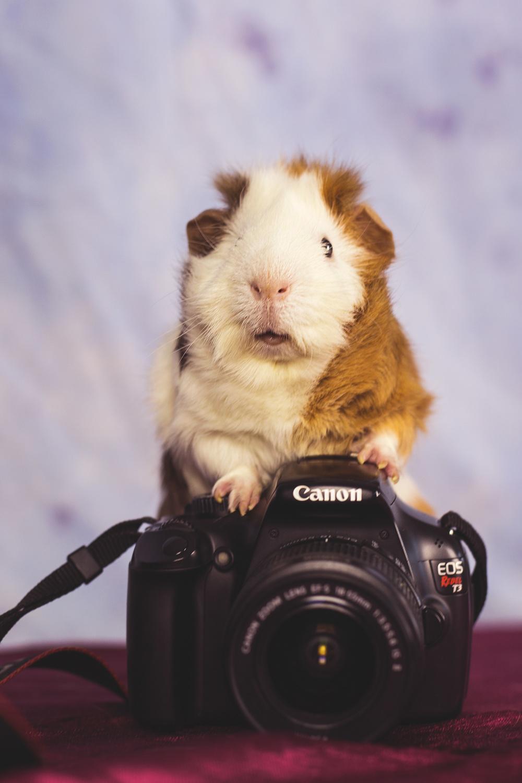 cameraginge.jpg