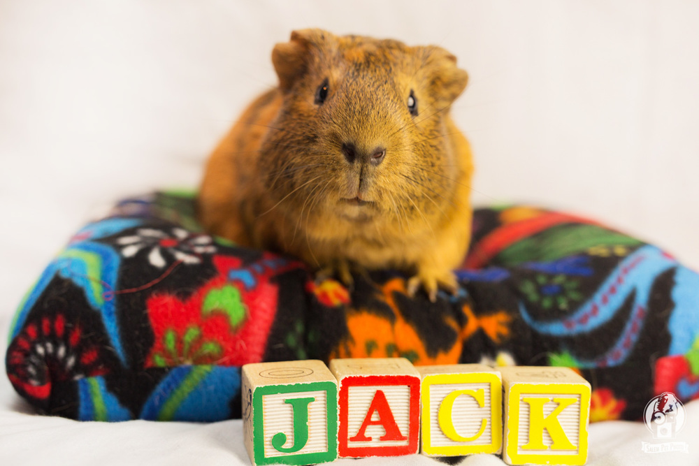 JackNick-8.jpg