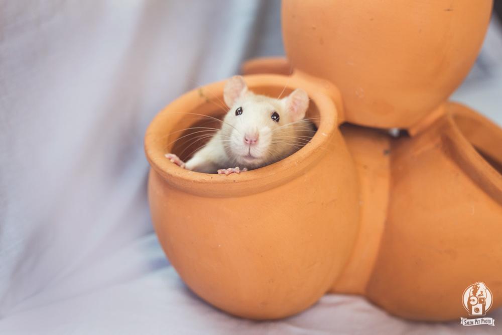 rats-2.jpg