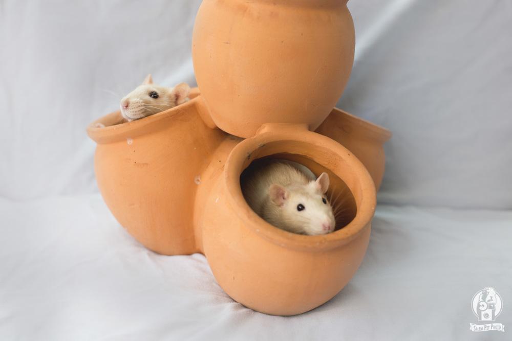 rats-13.jpg
