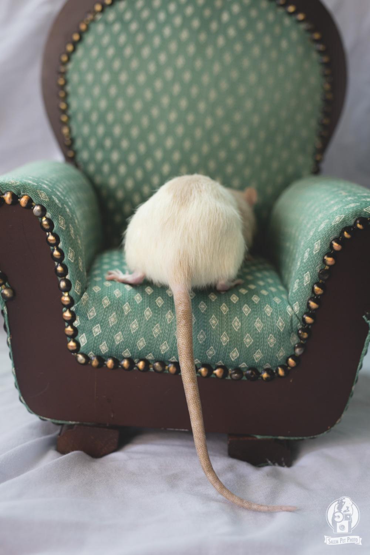 rats-15.jpg