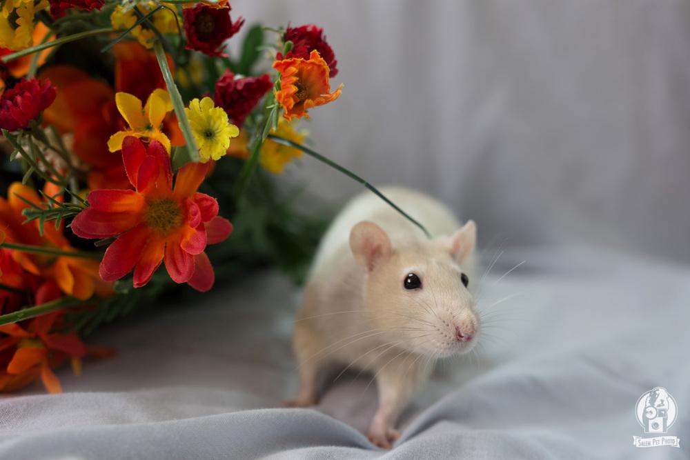 rats-20.jpg