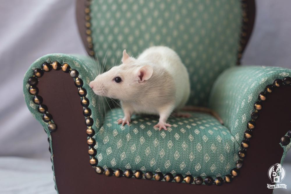 rats-18.jpg