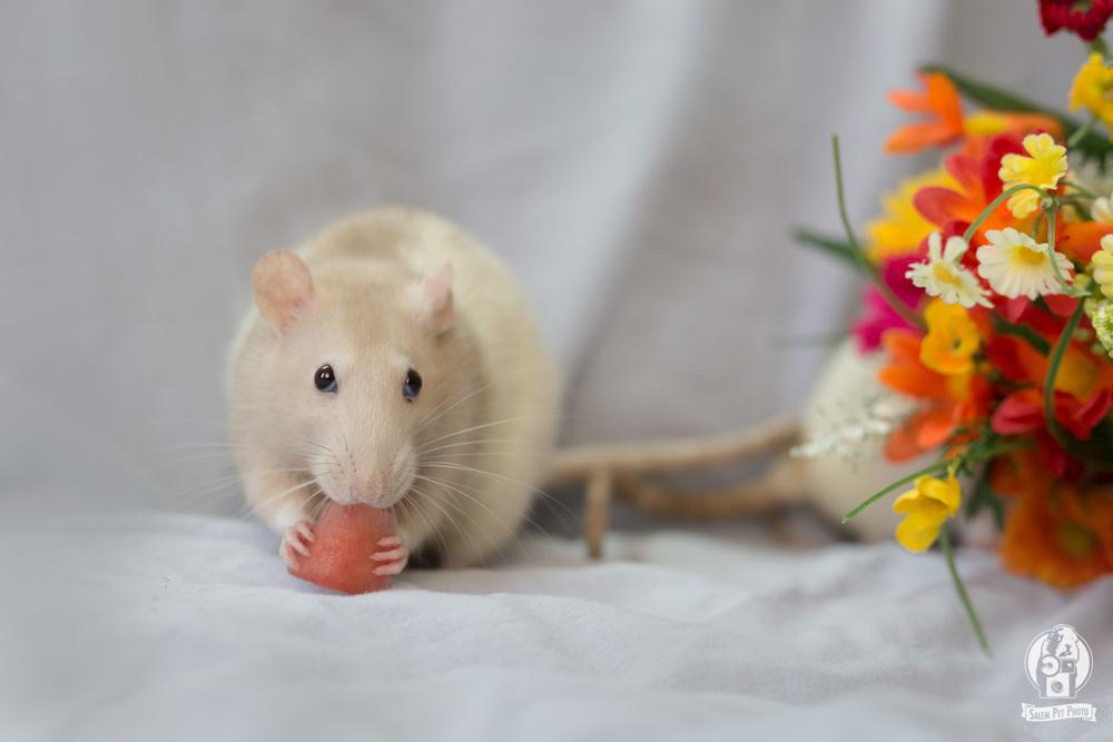 rats-21.jpg
