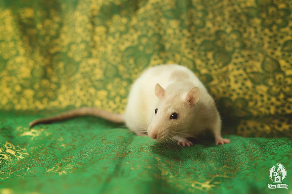 rats-29.jpg