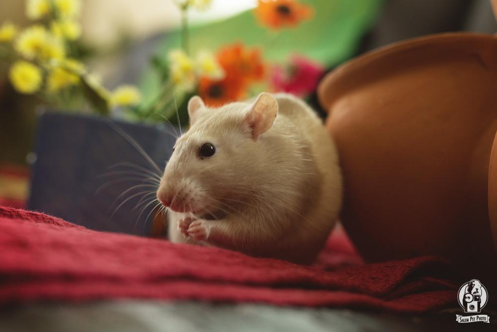 rats-31.jpg