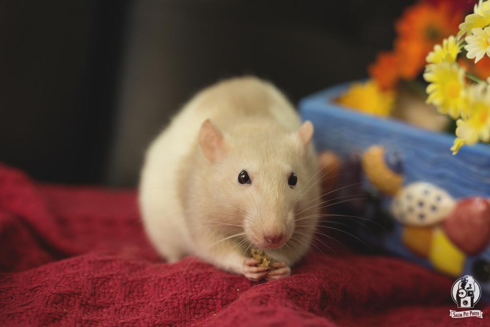rats-36.jpg