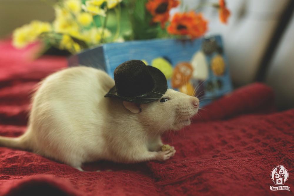 rats-38.jpg