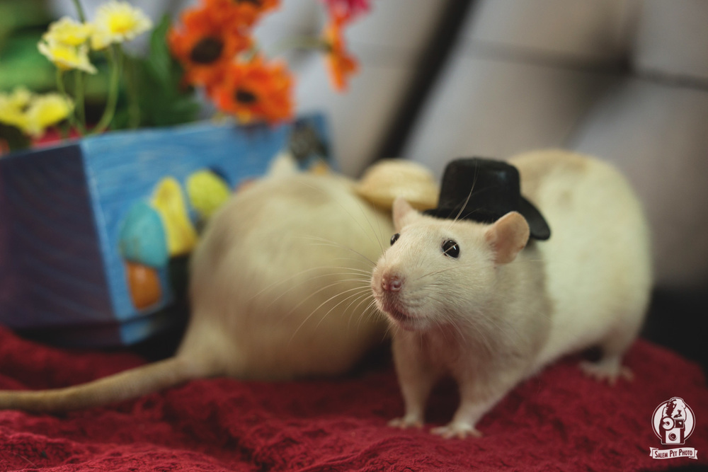rats-39.jpg
