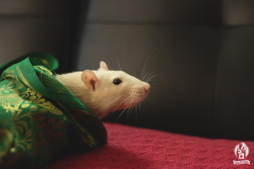 rats-41.jpg