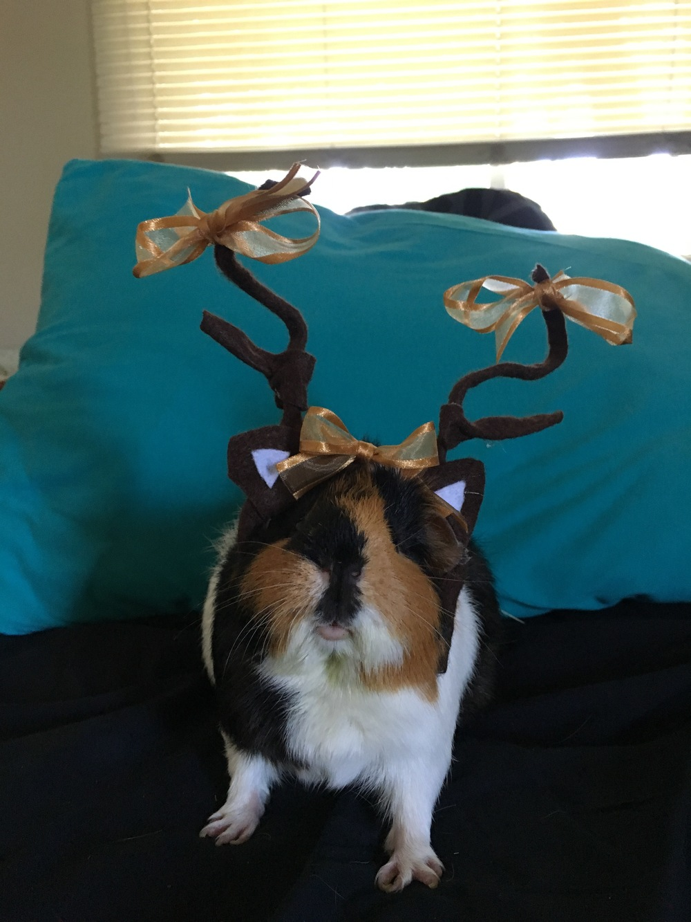 Sassafras trying out the antlers