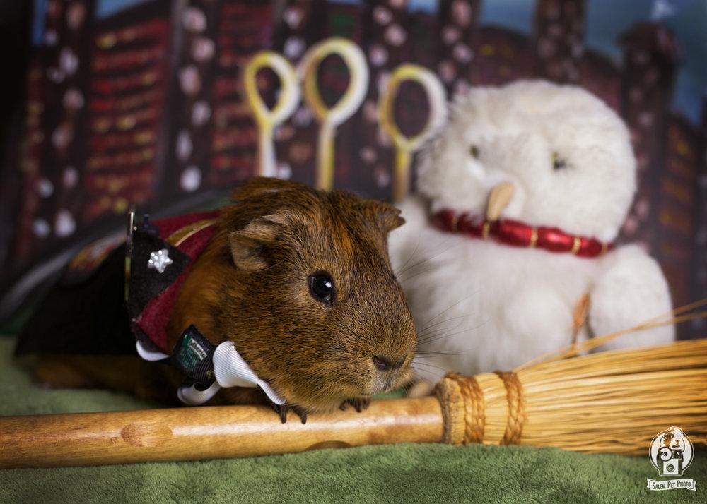 PiggiePotter-wm-11.jpg