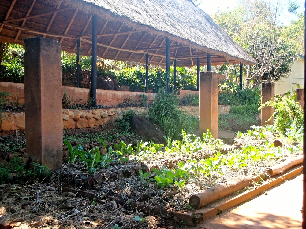 CELUCT has applied permaculture principles to successfully regenerate the landscape and improve nutrition throughout Chikukwa village.