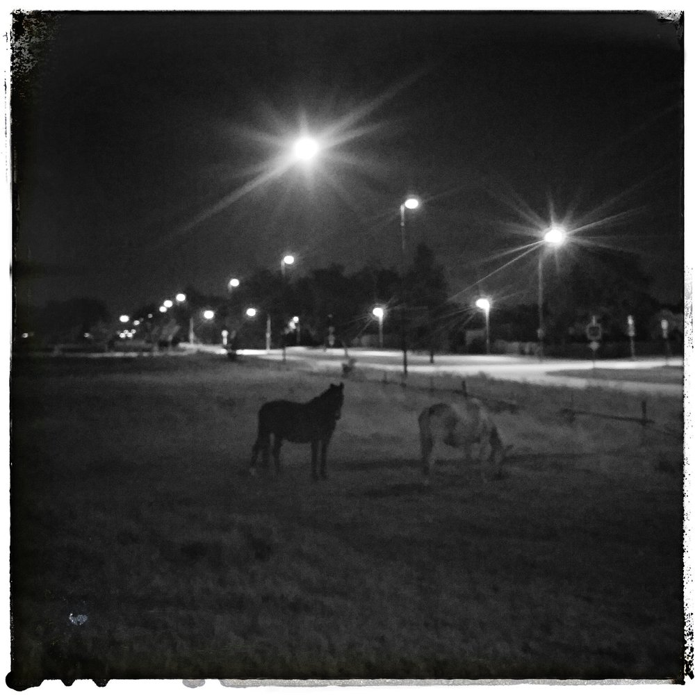 August 17 - Day 230: Grazing under a full moon