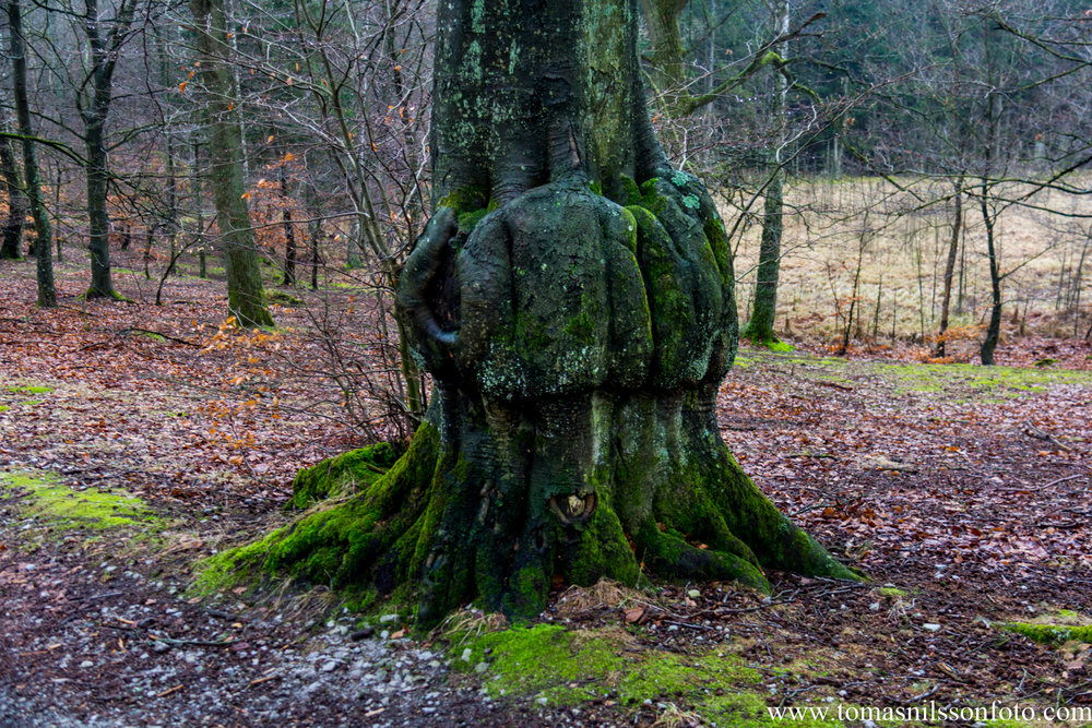 To me it looks like a pair of hands holding up the rest of the tree trunk.