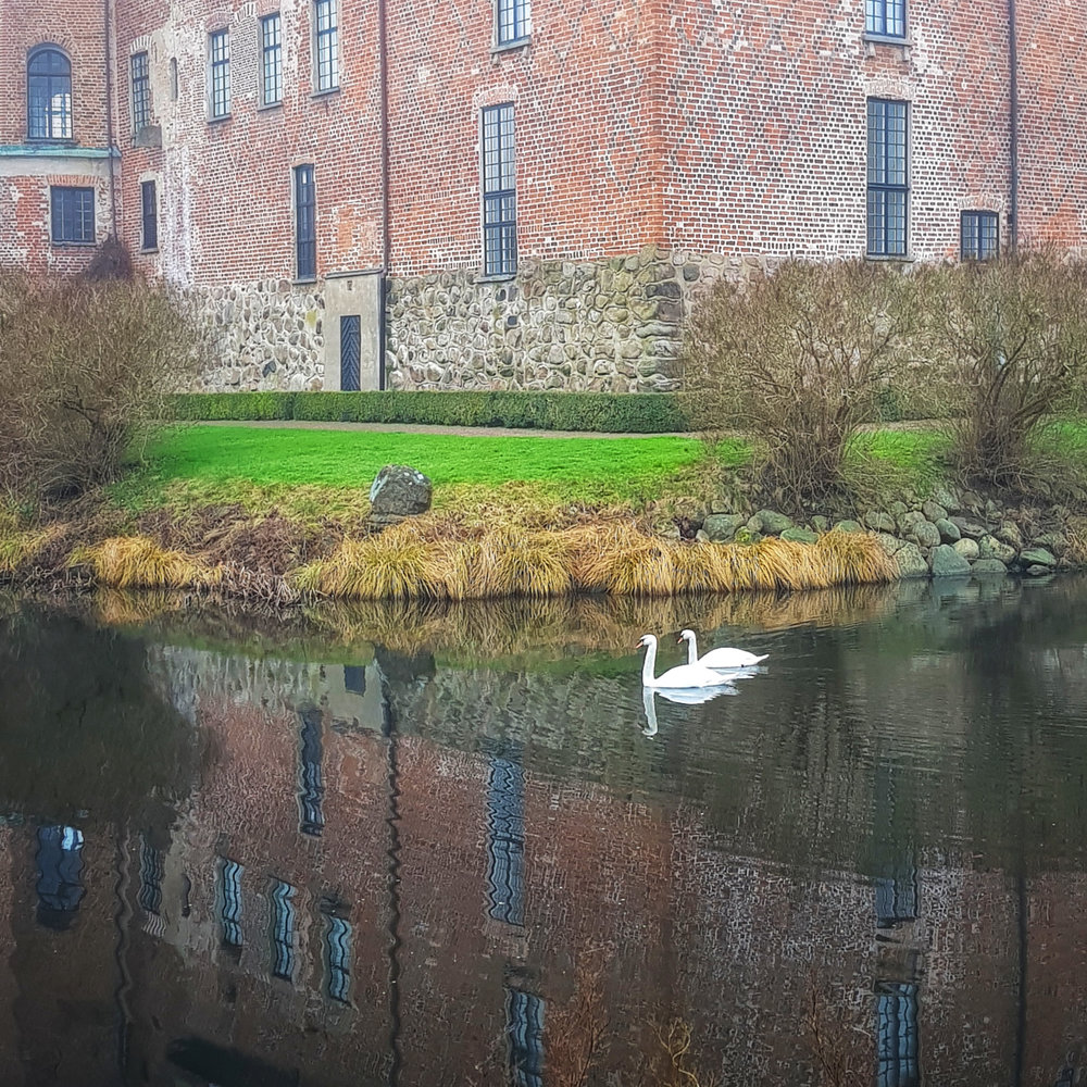 January 26 - Swans