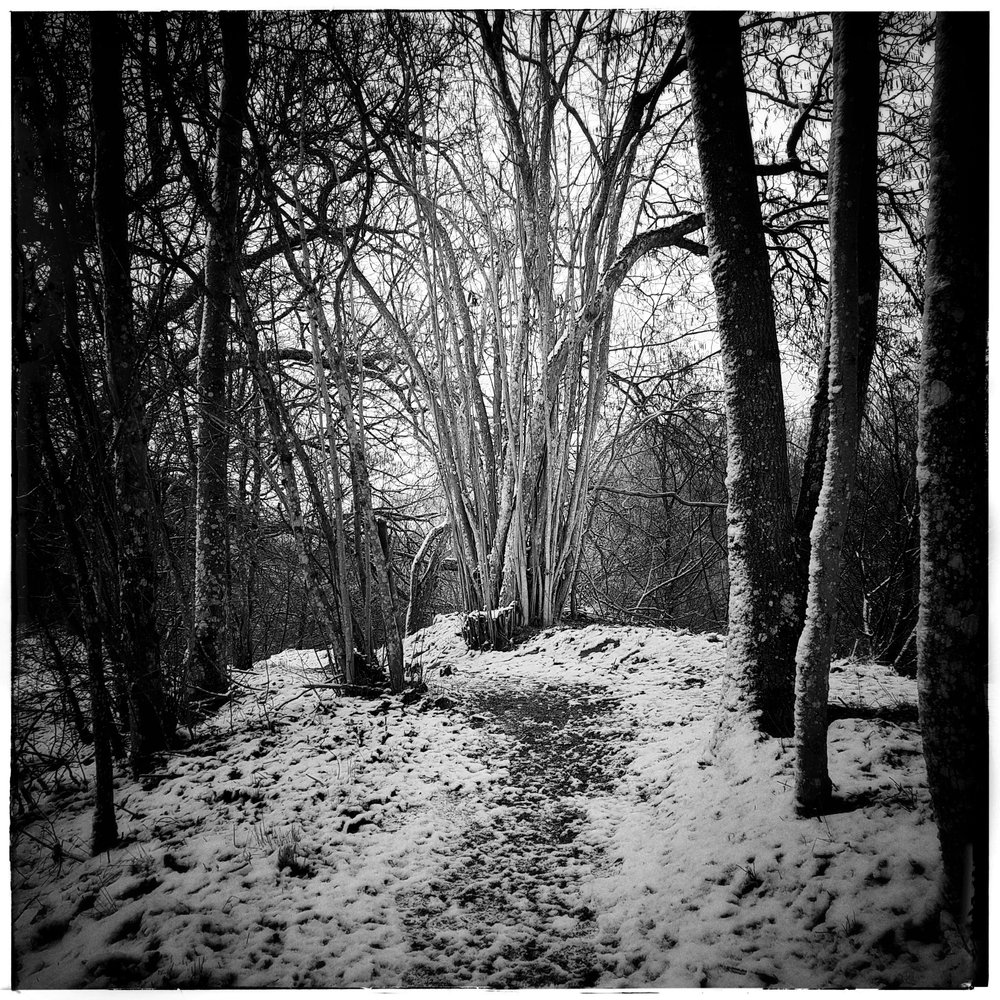 Day 42 - February 11: Forest Path