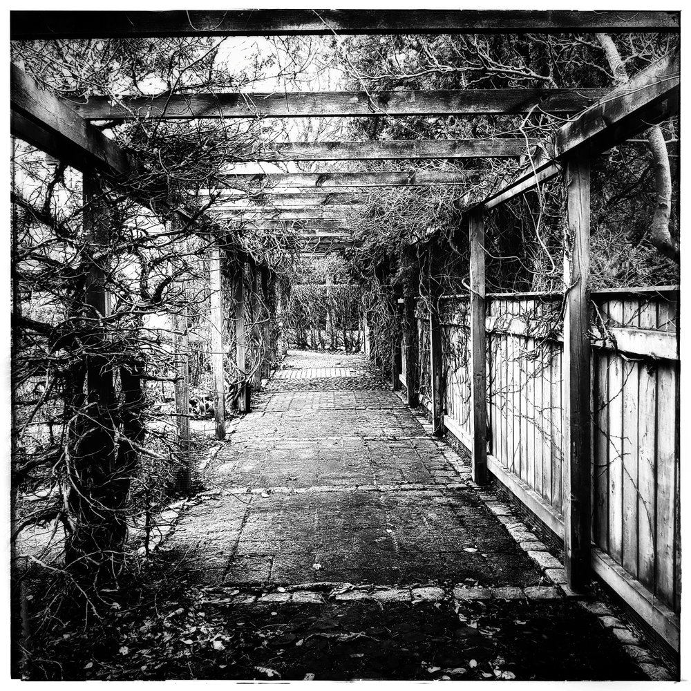 Day 50 - February 19: Garden Pergola