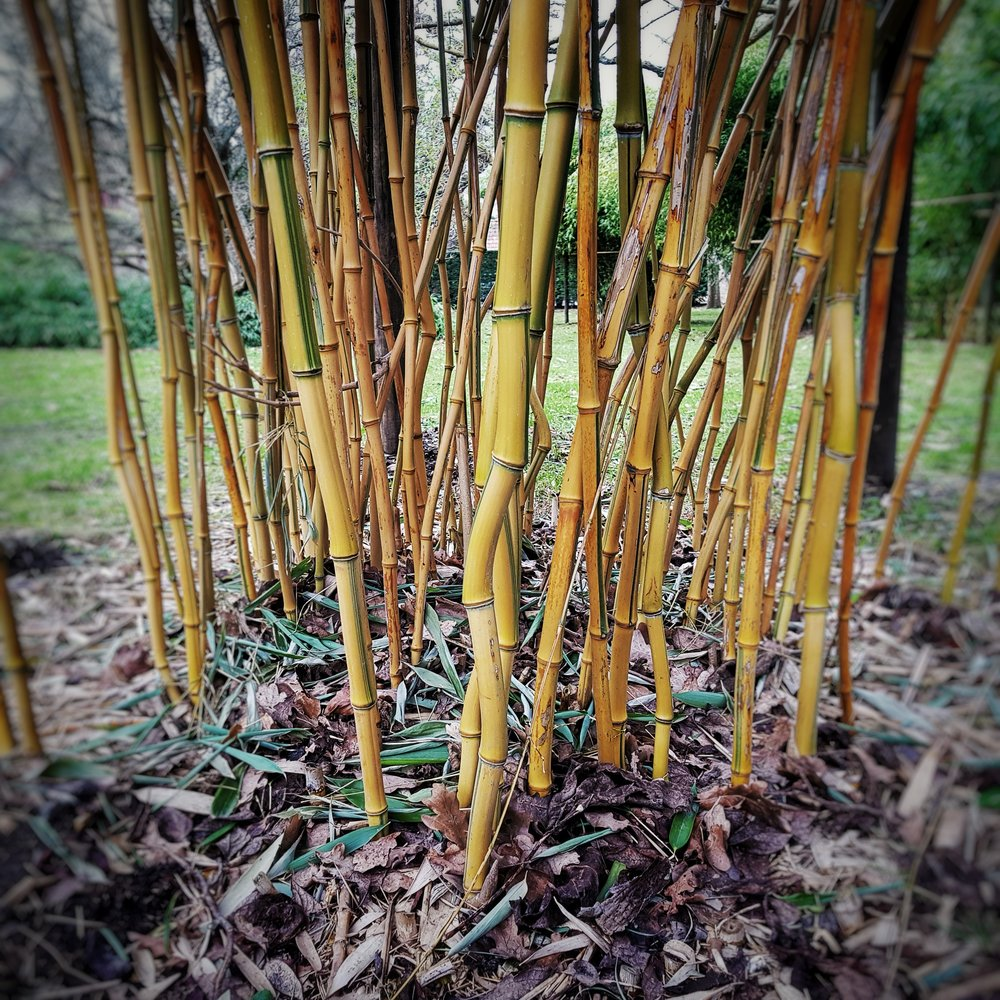 Day 56 - February 25: Bamboo