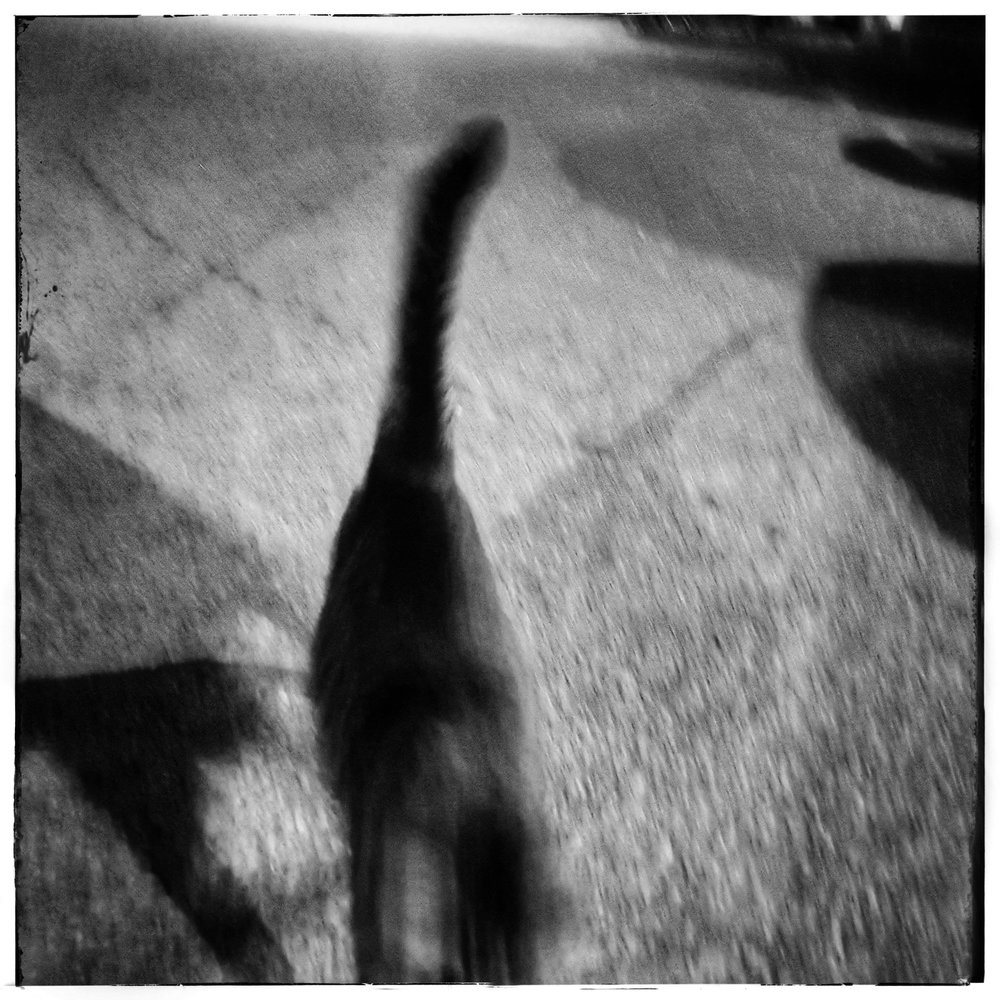 Day 144 - May 24: Speedy Kitty!