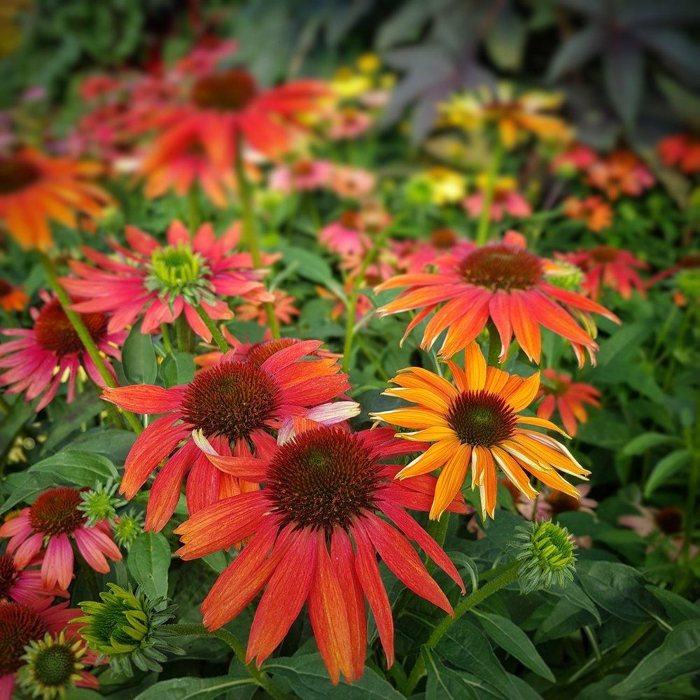Day 249 - September 6: Flower Assemblage