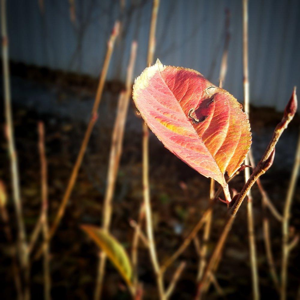 Day 301 - October 28: Leaf