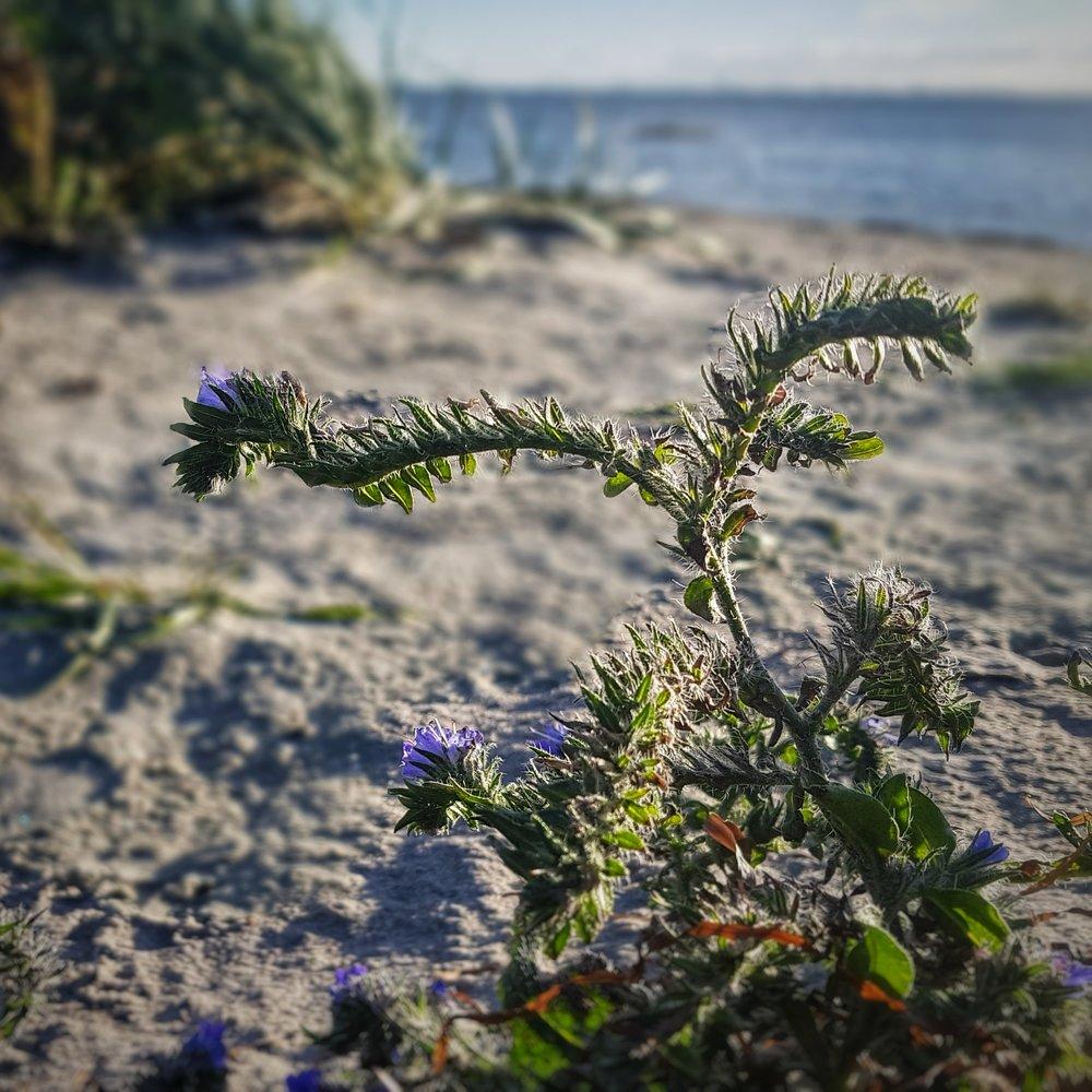 Day 302 - October 29: Little flower