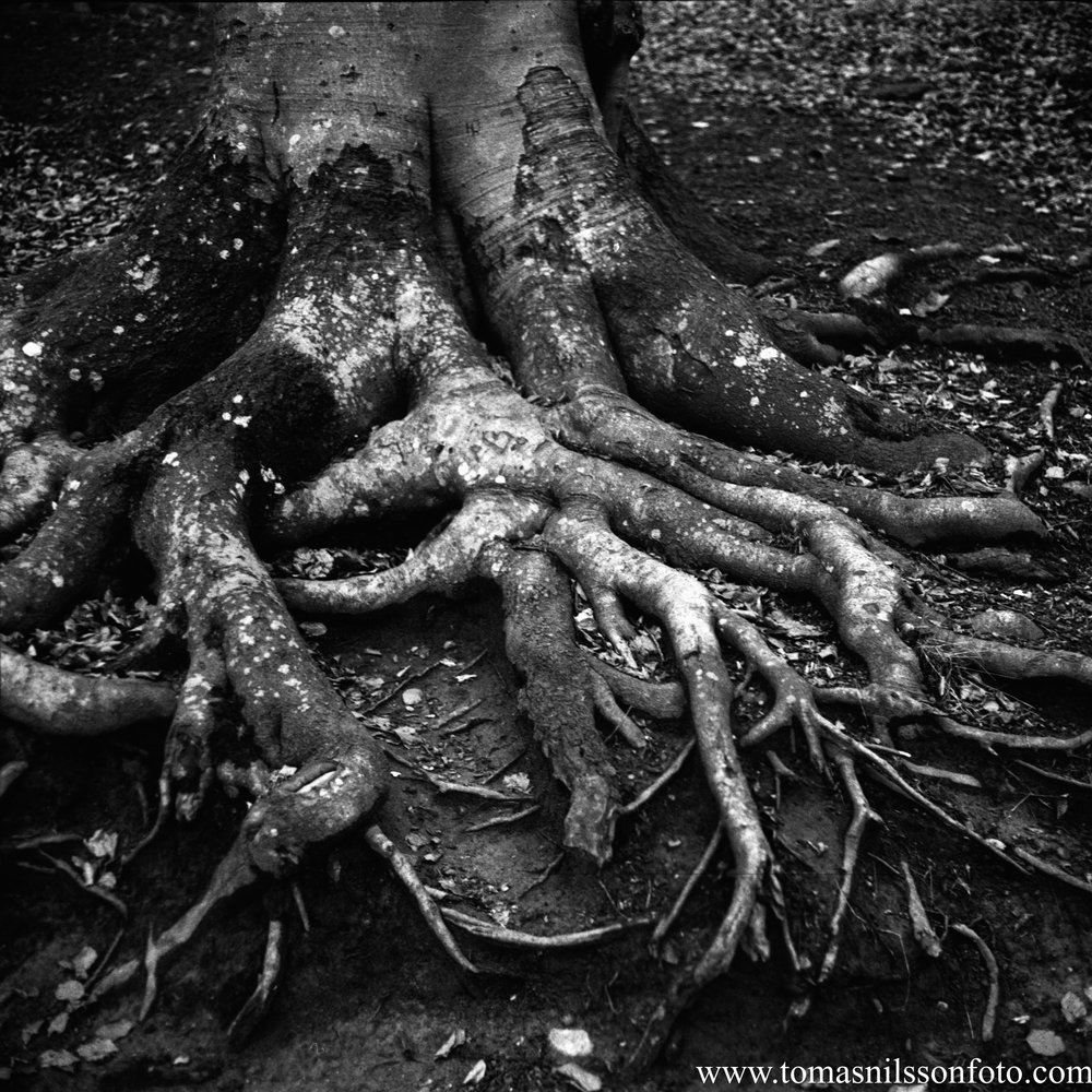 Day 22 - January 22: Roots