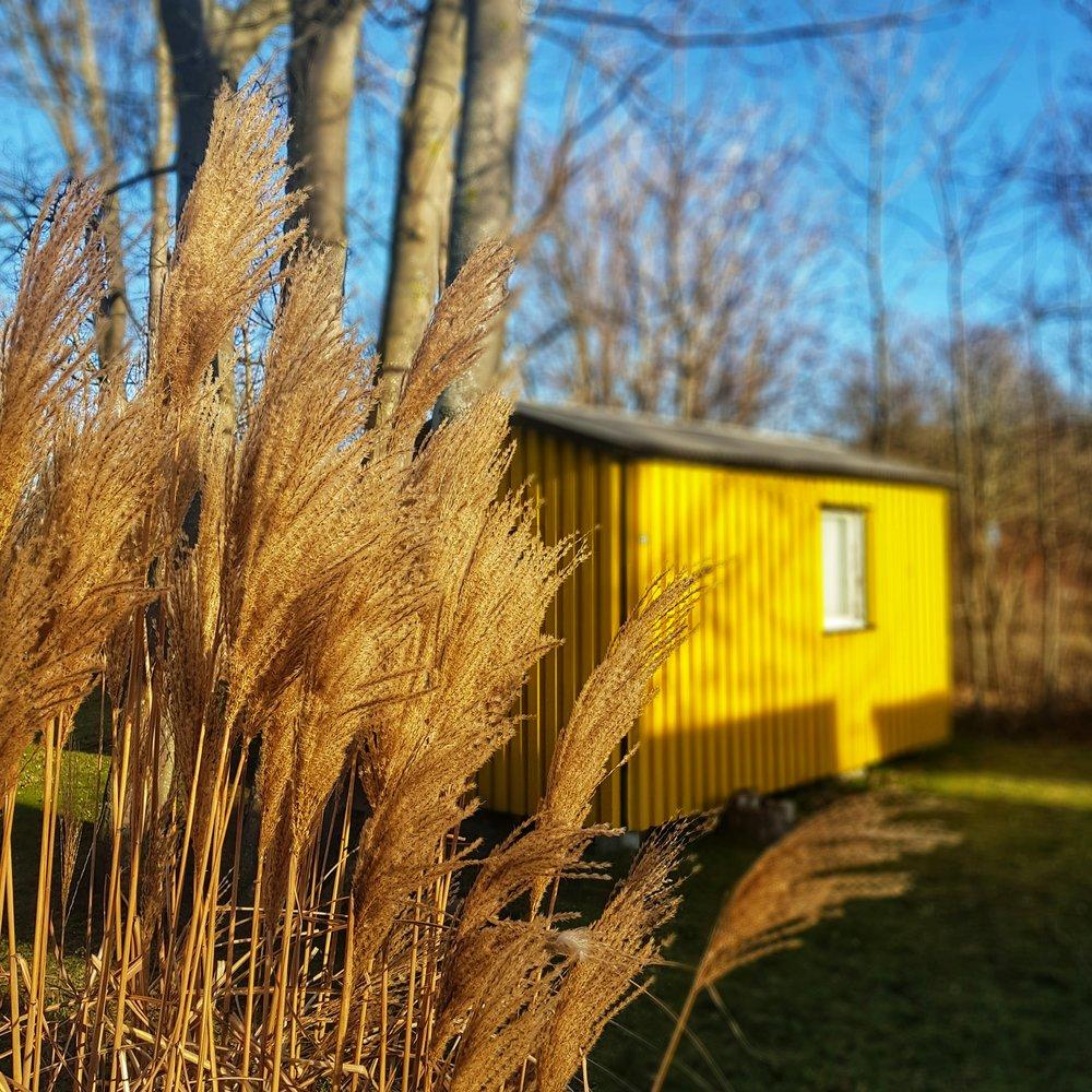 Day 42 - February 11: Yellow