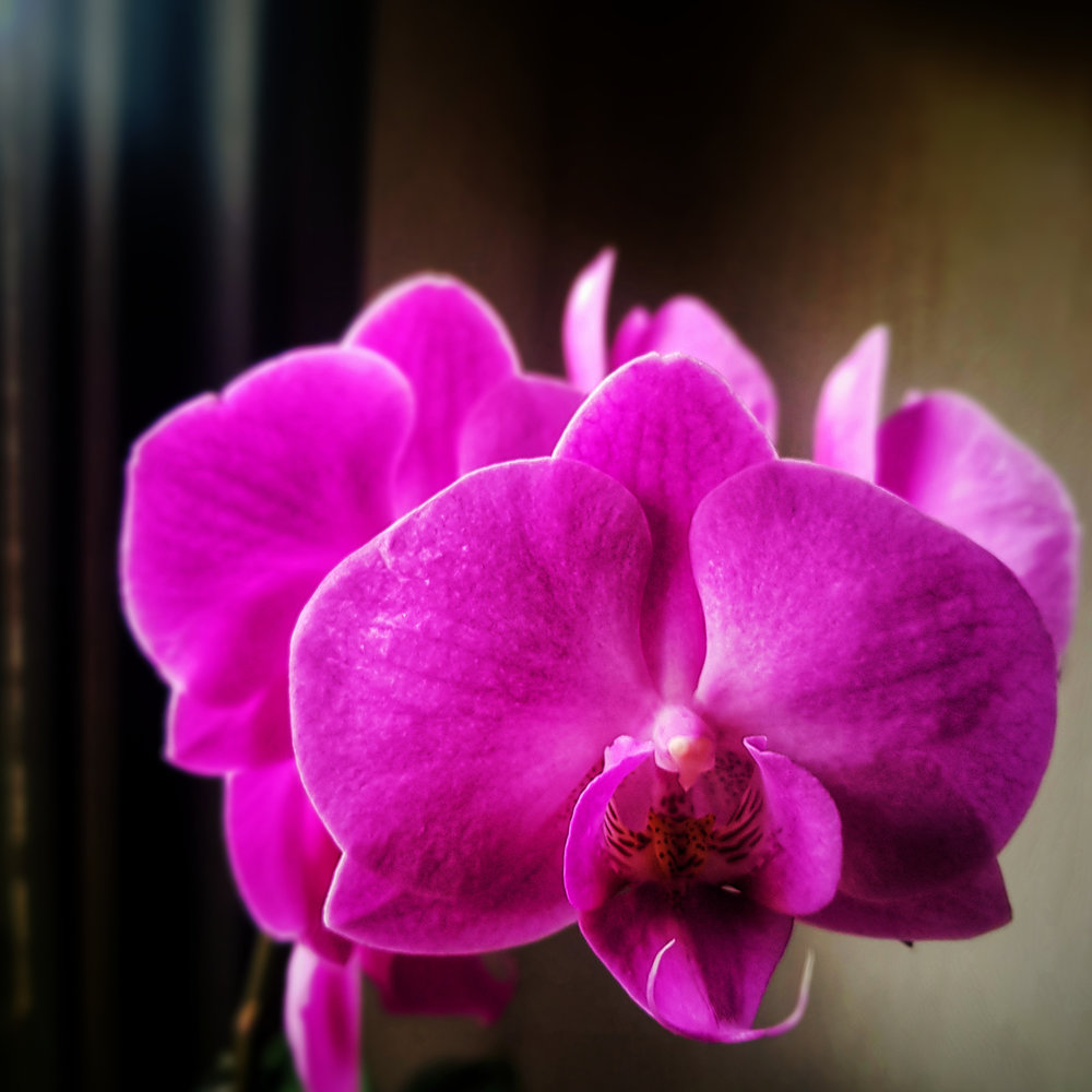 Day 45 - February 14: A flower on Valentine's Day