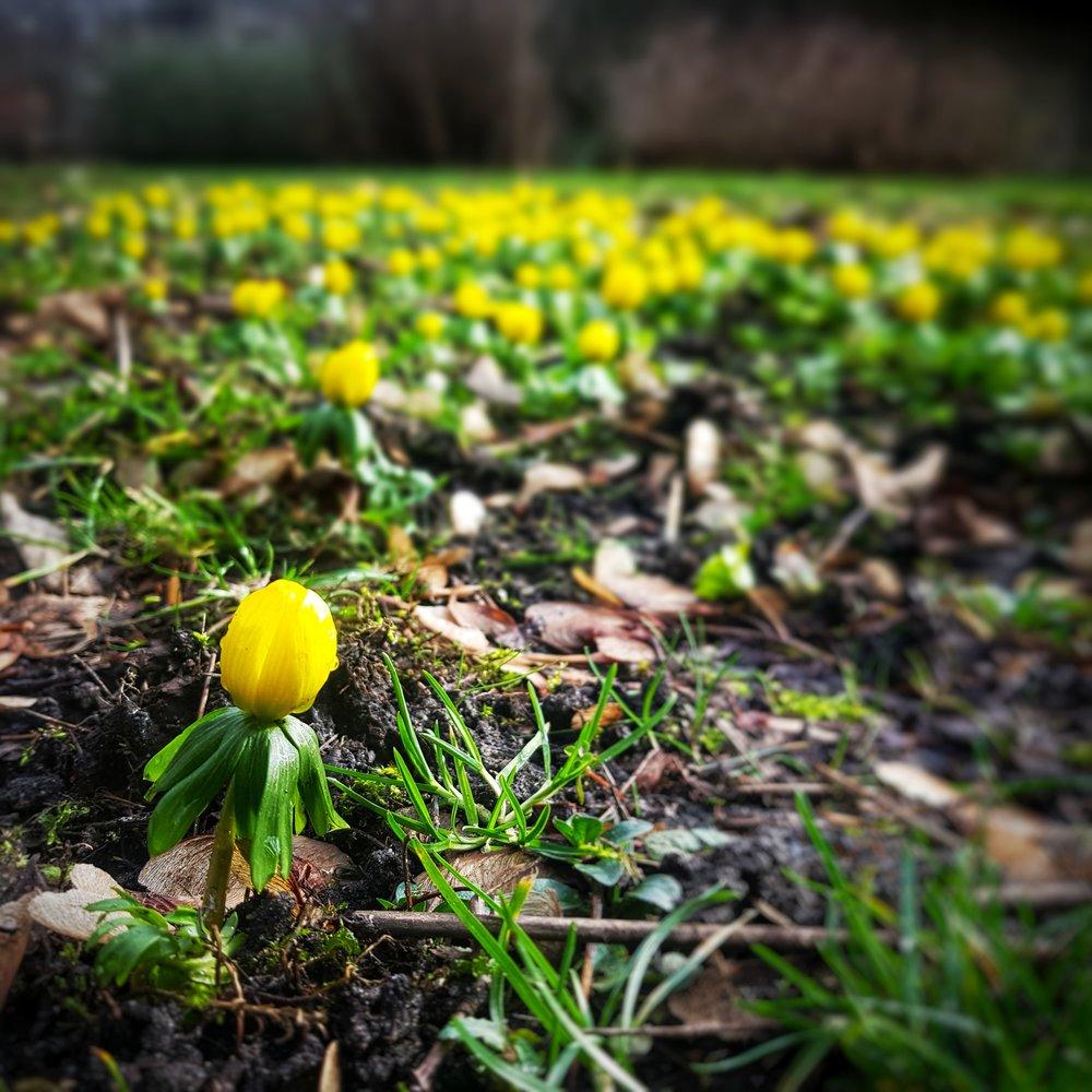 Day 51 - February 20: Little Flower