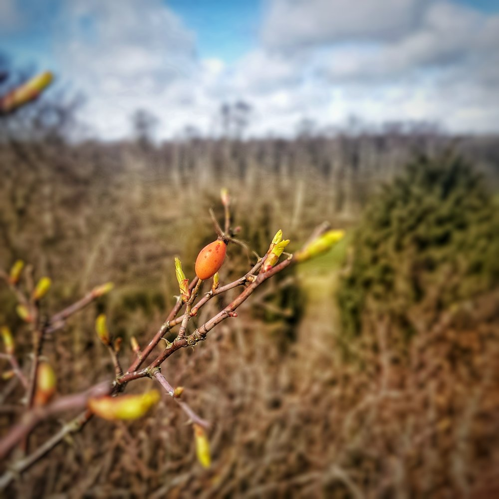 Day 84 - March 25: Leaves are almost here