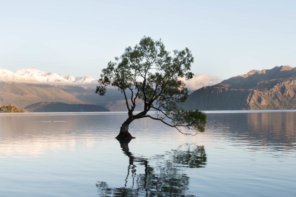 Wanaka Tree-2.jpg