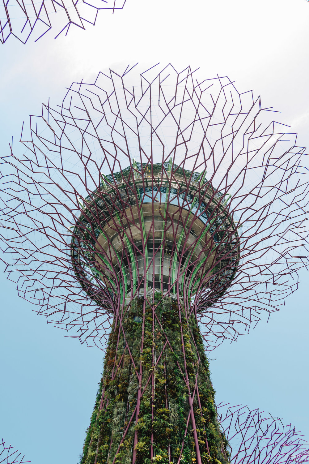 Gardens by the Bay-15.jpg