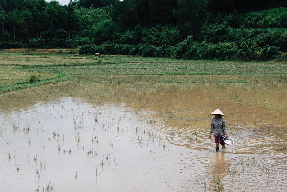 Phong Nha-11.jpg