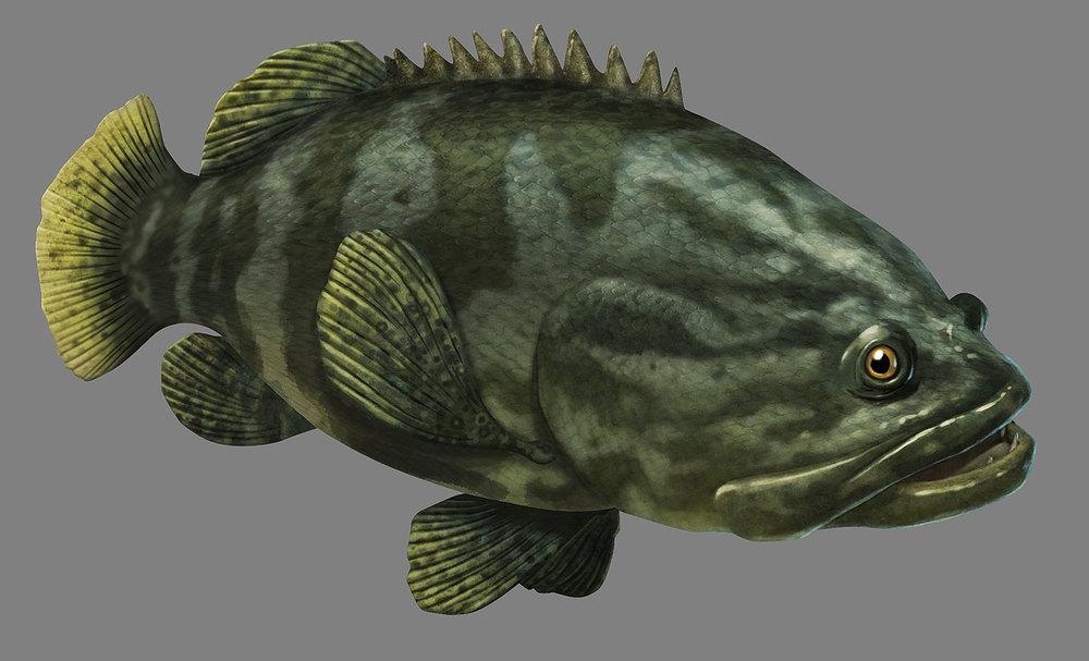 grouper800.jpg