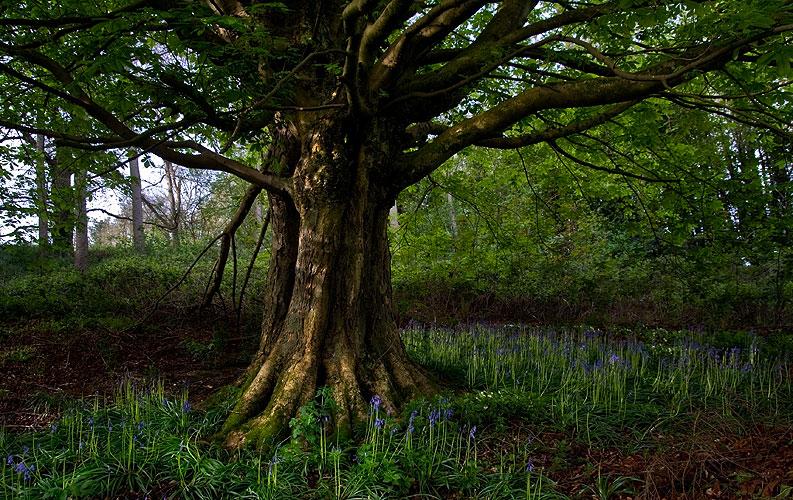 017_tree.jpg