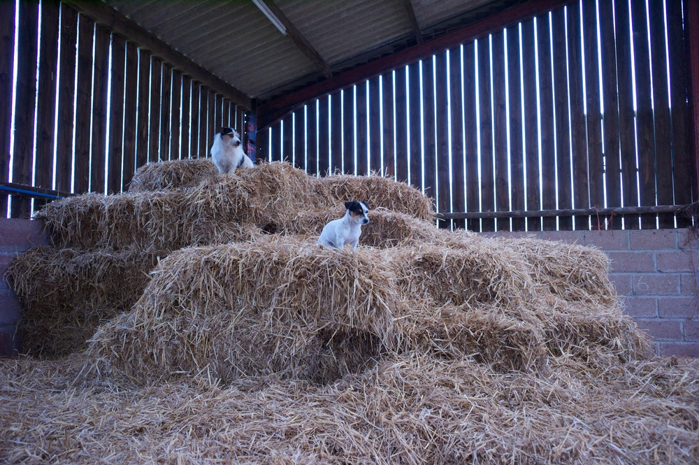 Once sawn the oak spent many years seasoning in this barn alongside daily farm life. Thanks to Rosie and Lilly for the wonderful pose.
